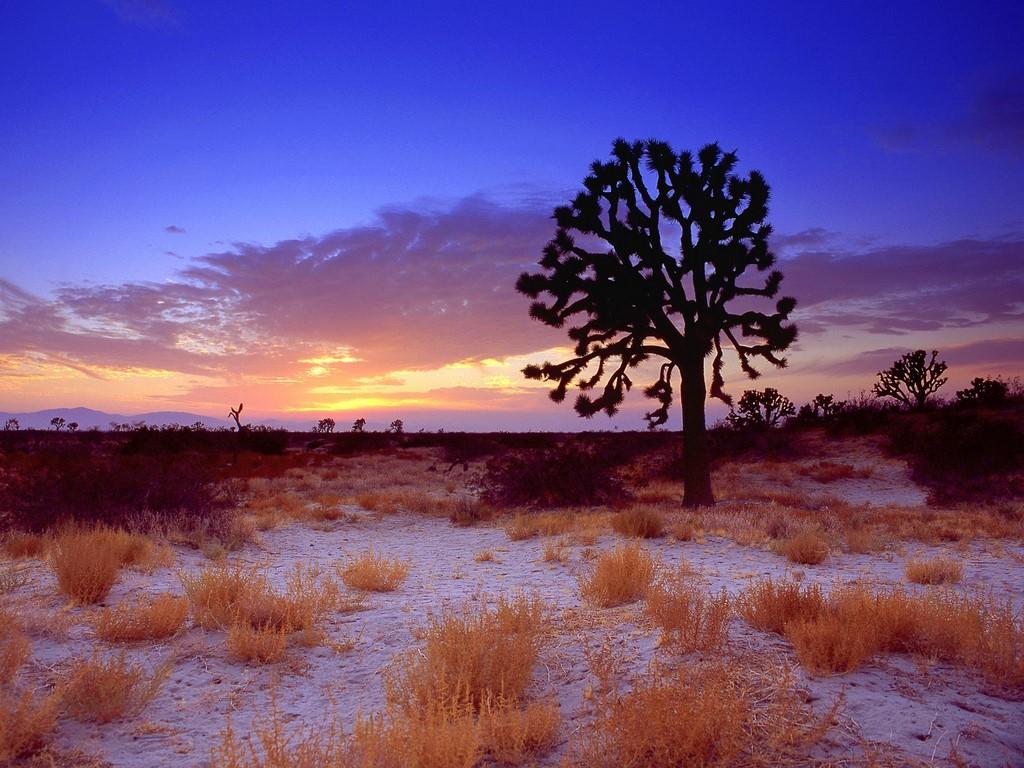 rencontre avec dieu dans le desert
